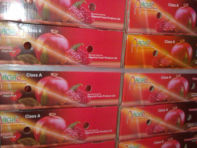 AGRO pomegranate export to europe from saveh fa