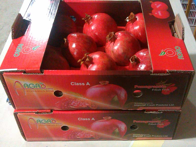 AGRO pomegranate export packing