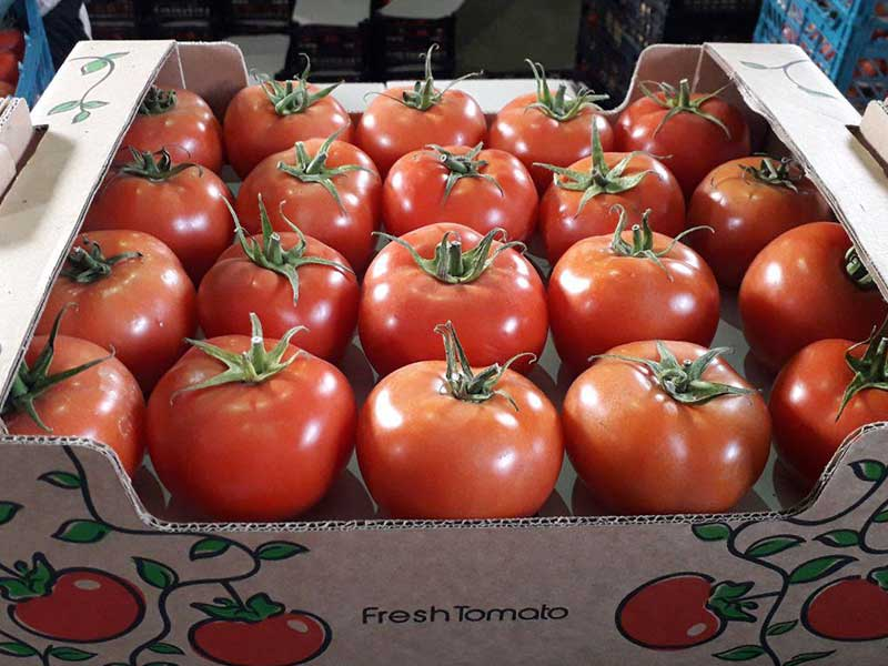 tomatoes agro export carton